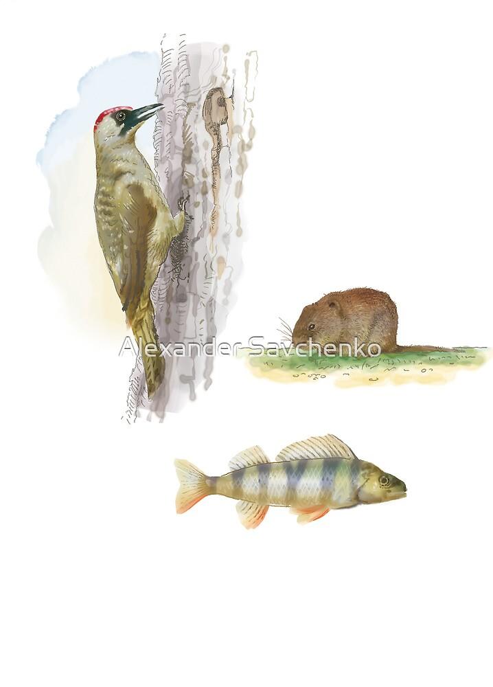 woodpecker, beaver and fish (watercolor) by Alexander Savchenko
