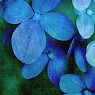 Hydrangea Blues by Christine Annas