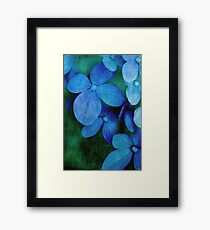 Hydrangea Blues Framed Print