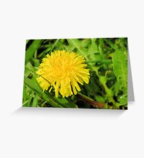 Behold the Lowly Dandelion Greeting Card