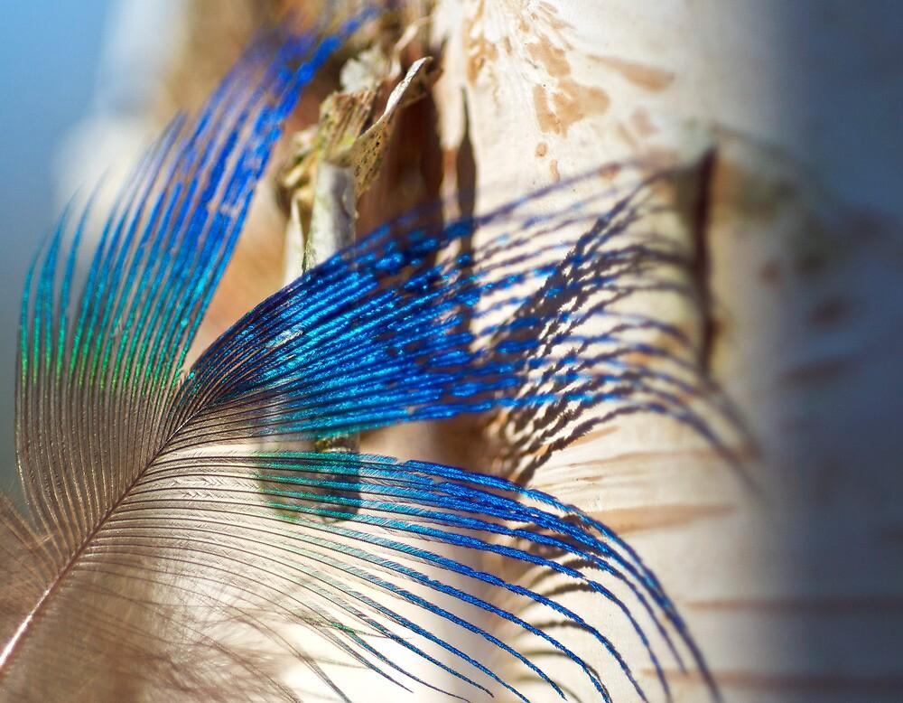 Dream Feather by Kenneth Haley