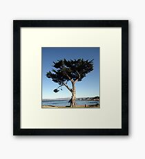 Unique California Tree Print Framed Print