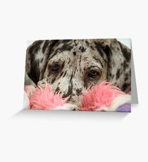 Great Dane Puppy Portrait Greeting Card