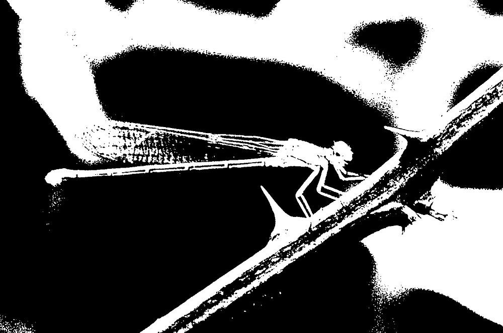 Dragonfly by scott staley