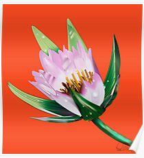 American Lotus Vector Image Poster