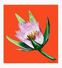American Lotus Vector Image Photographic Print