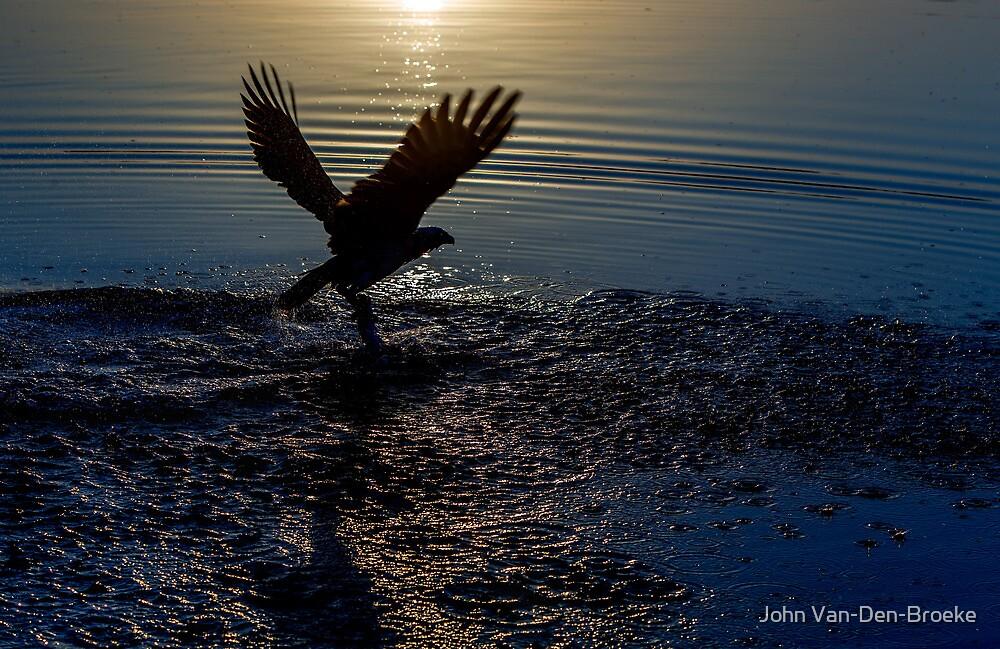 Osprey  477 by John Van-Den-Broeke