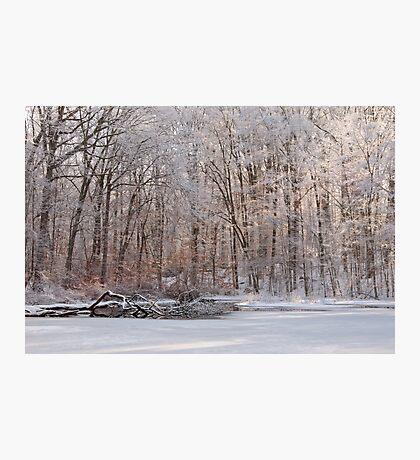 Fresh Coat Of Snow Photographic Print