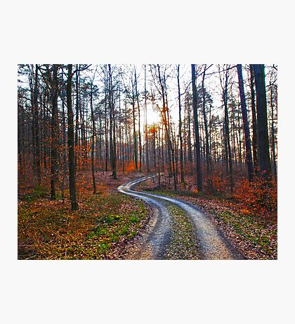 Silver Path in the Woods VRS2 Photographic Print