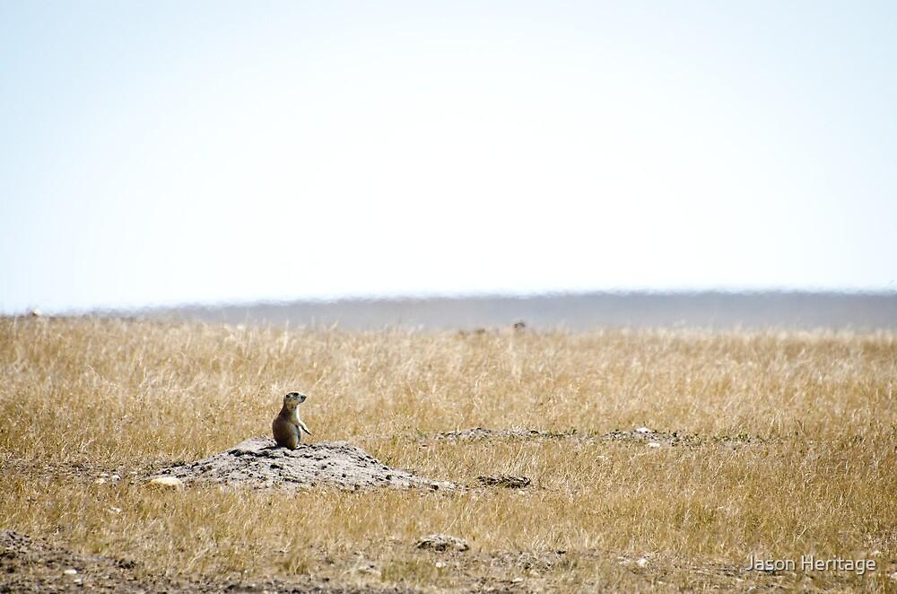 Prairie Dog - Badlands National Park, South Dakota by Jason Heritage