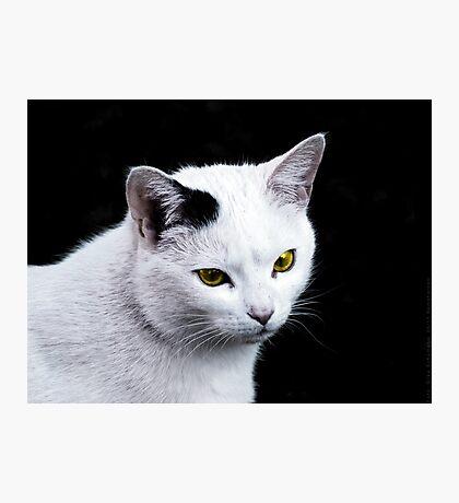 Cat Portrait VRS2 Photographic Print