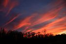 Streaking Across The Sky by NatureGreeting Cards ©ccwri