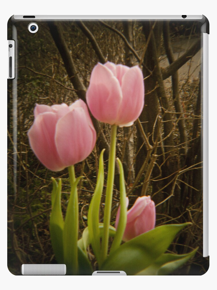 Pink Tulips VRS2 by vivendulies
