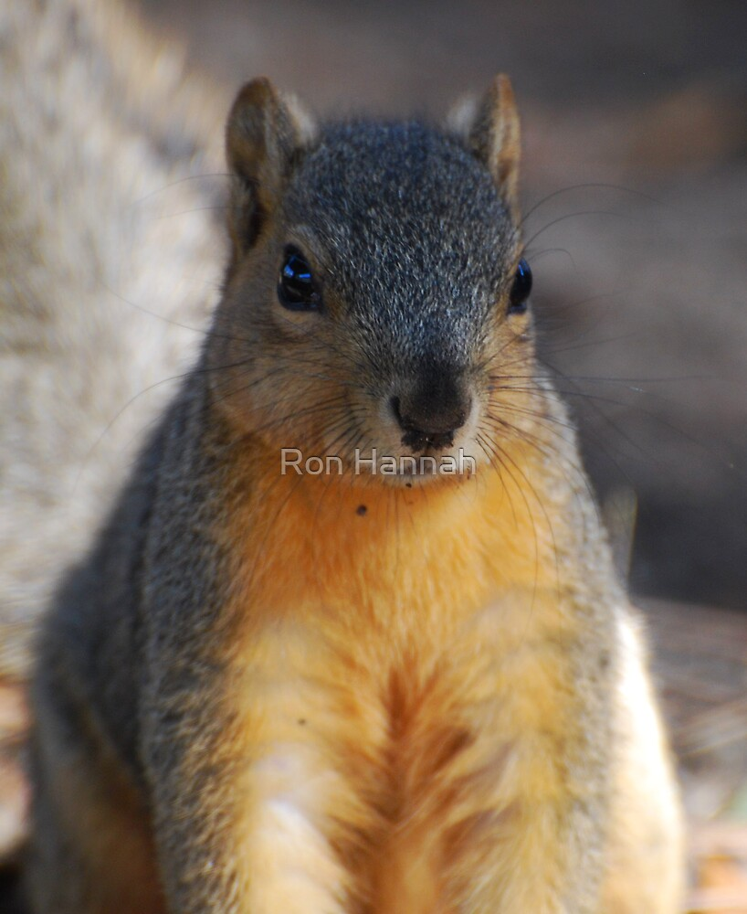 Squirrel by Ronald Hannah