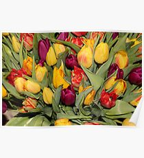 An Ocean Full Of Tulips  Poster