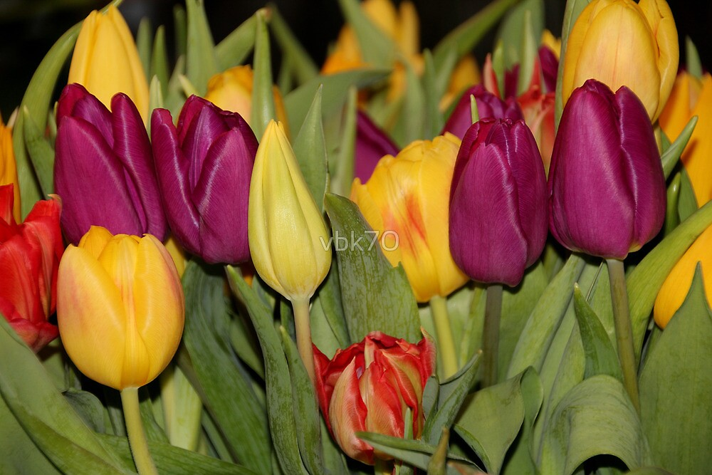 An Ocean Full Of Tulips III by vbk70