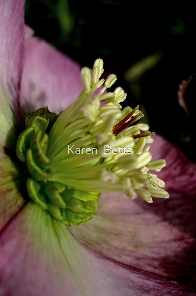 Christmas rose, deep pink   7/25 project by Karen  Betts