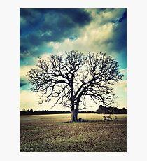 Tree In Field on Lamb's Bridge Photographic Print