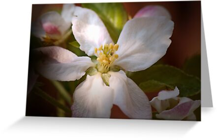 Apple blossoms in Spring sun by walstraasart