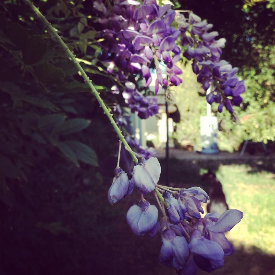 Summer Blossom by Vivien Murphy