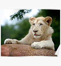 Lion Cub Dry Brush Poster