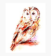 Strix aluco Photographic Print