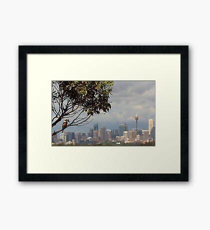 Kookaburra Skyline Framed Print