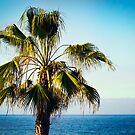The Palm Tree Island by Chris Cardwell