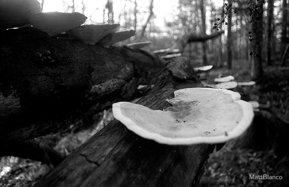 Mushrooms by MattBlanco
