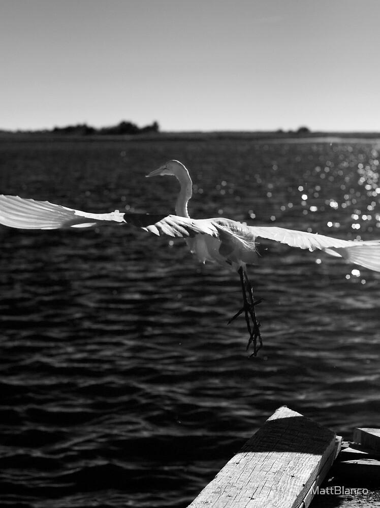 Egret Flying by MattBlanco