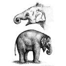 Baby elephant study G008-SK016 by schukinart