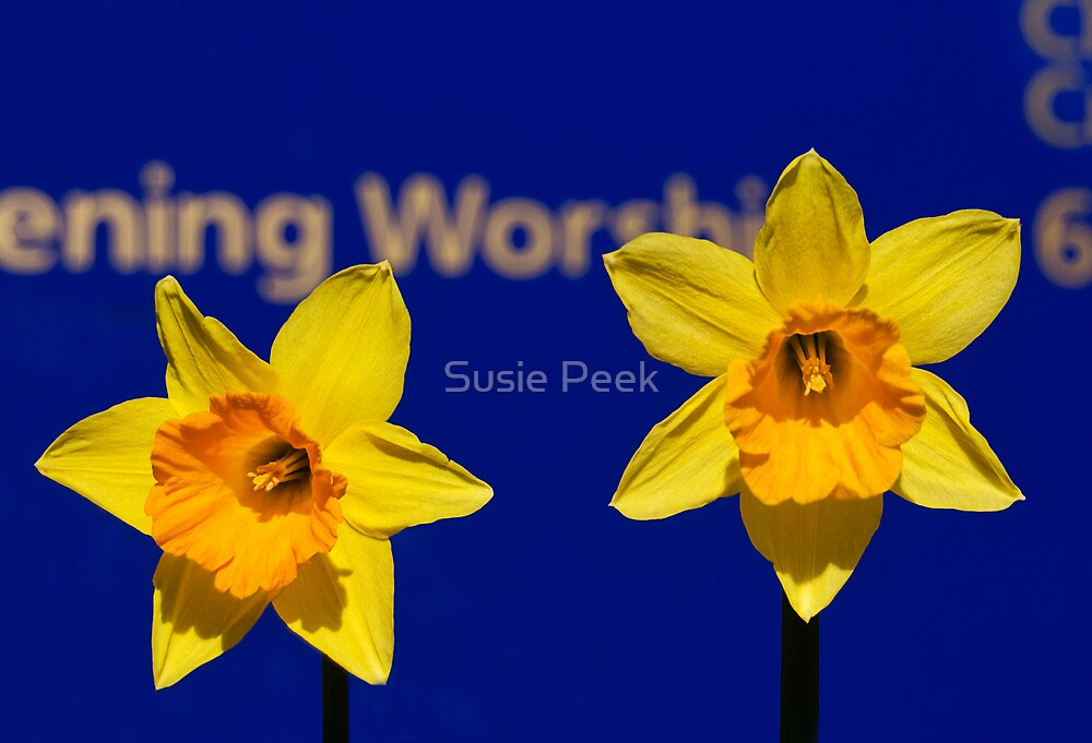 Worships The Daffodils by Susie Peek