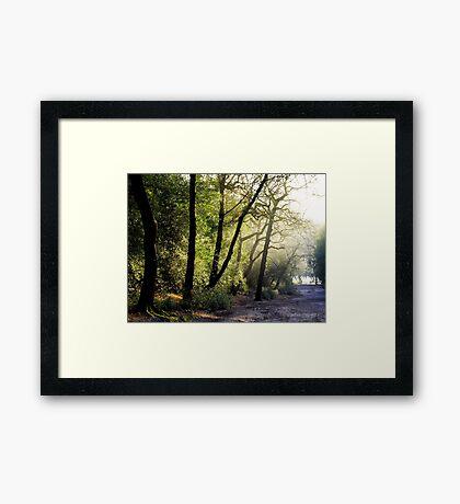 Path to Blackroot Pool Framed Print