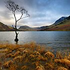 Lone Tree at Buttermere by Martin Lawrence