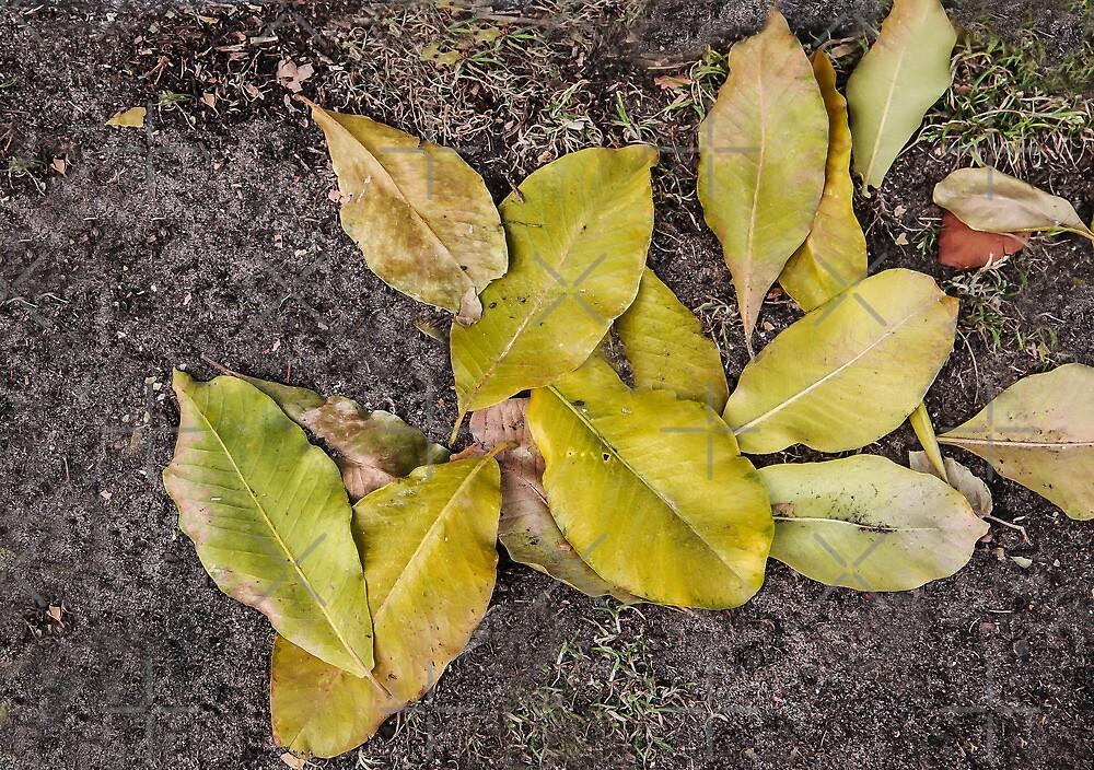 Fallen Leaves by Heather Friedman