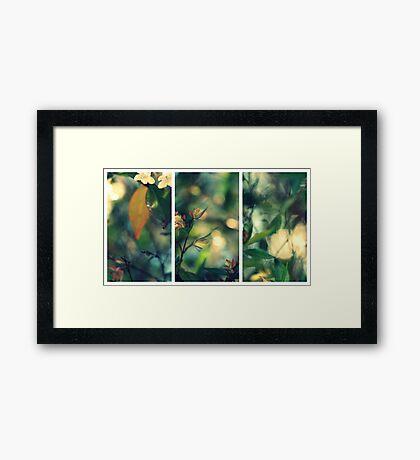 Daydream Believer Framed Print