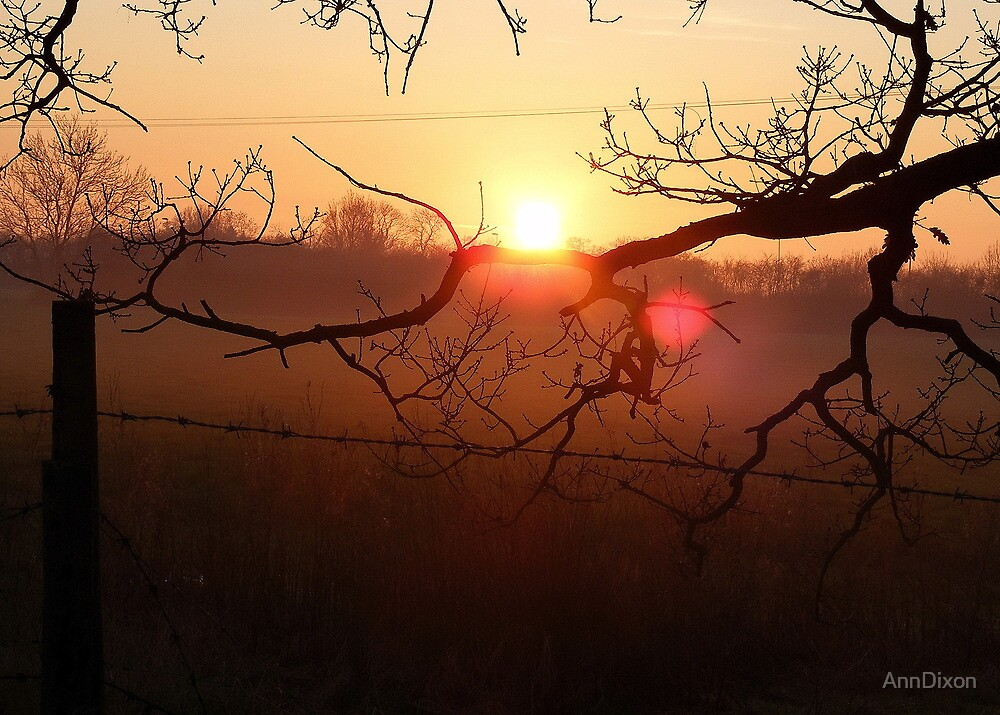 Barbed Wire Fence in a Sunset by AnnDixon