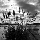 Through the Grasses by patti4glory