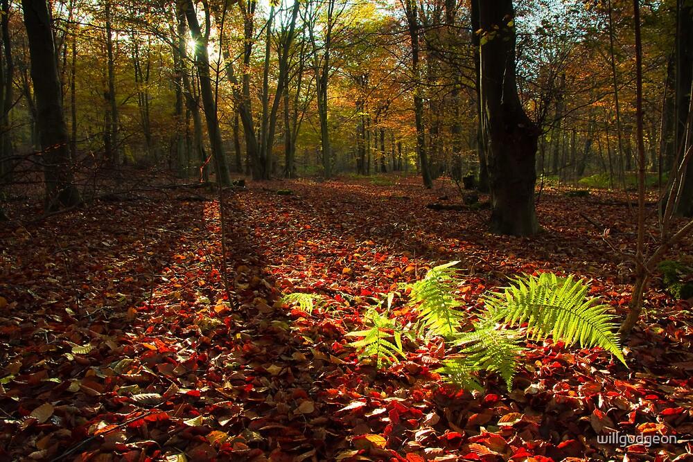 Autumn light by willgudgeon