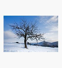 Winter Landscapes Photographic Print