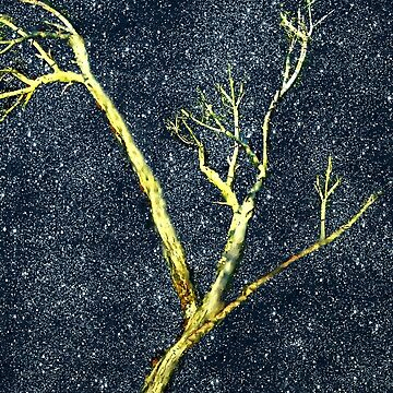 Ghost Tree by RCdeWinter