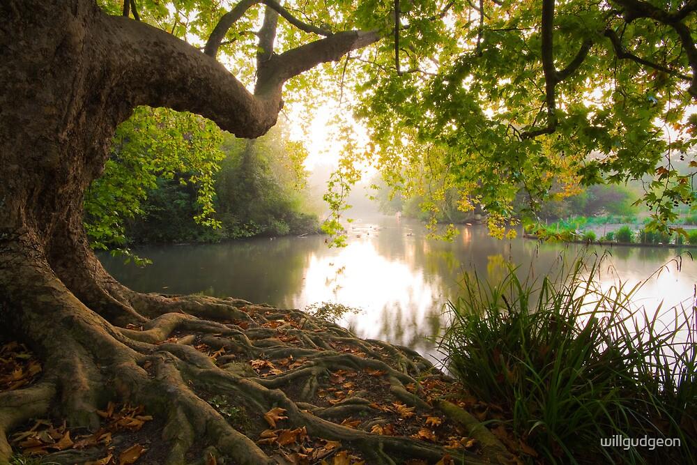 Hampden park pond by willgudgeon