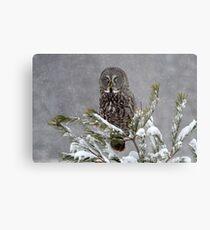 GREAT GRAY OWL  Metal Print