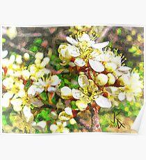 Wild Plum Flower Poster