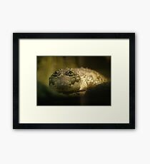 Crocodylus Moreletii Framed Print