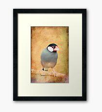 Java Sparrow Framed Print