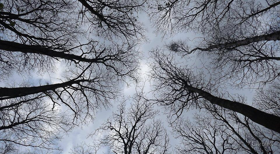 Above Us Only Sky by Carolek