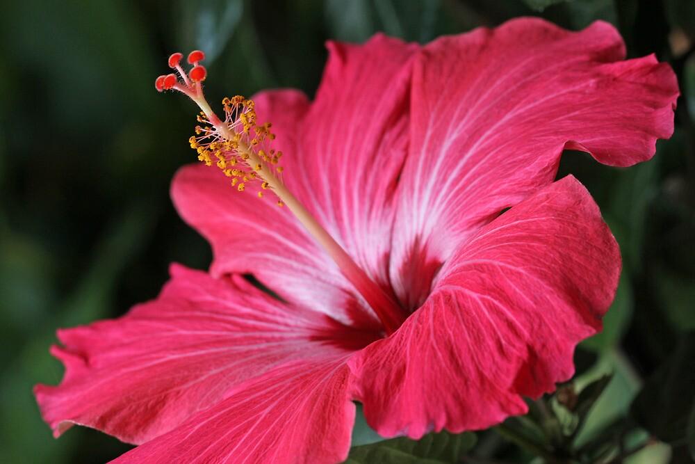 Longing for Spring by Lynn Gedeon
