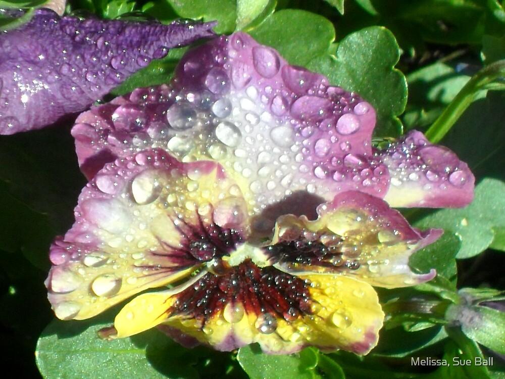 Dew Drops  by Melissa, Sue Ball