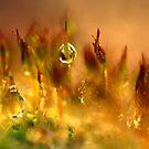 Golden Palette by AnnieSnel